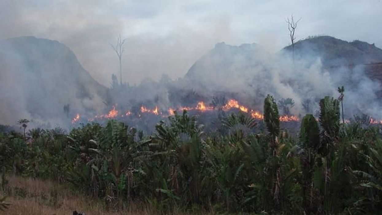 Set ablaze: More fires burning in Central Africa than Amazon