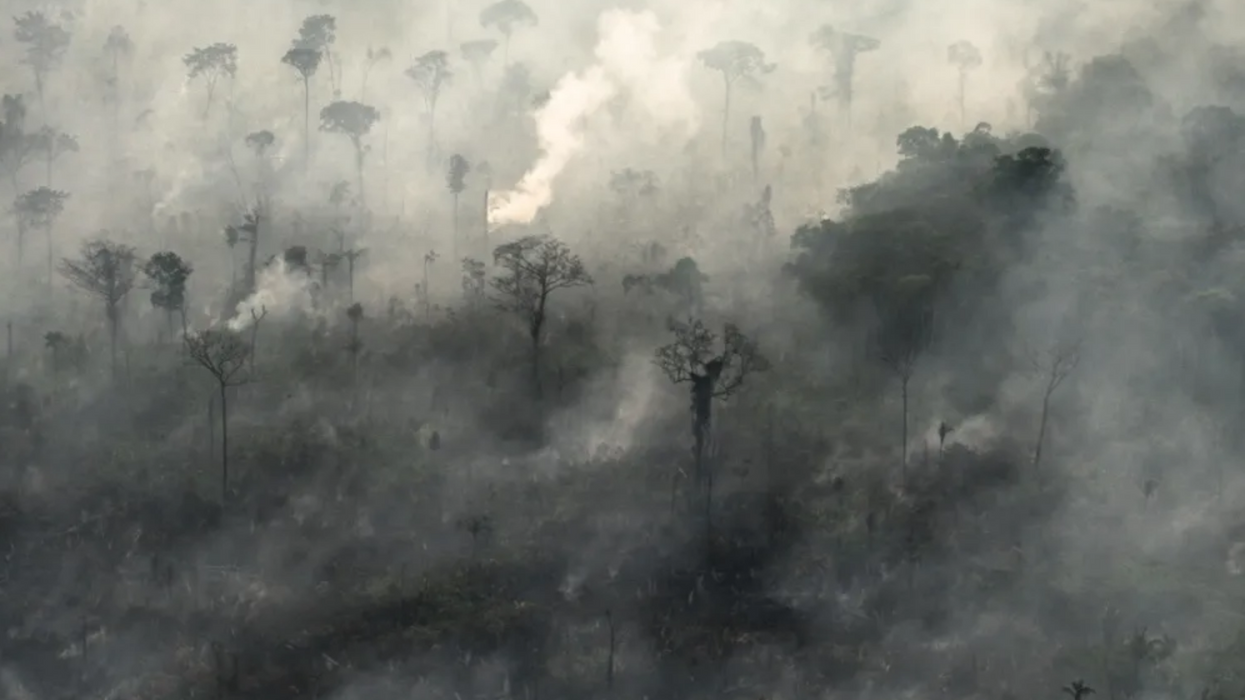 Why the number of fires in the Amazon is terrifying climate experts