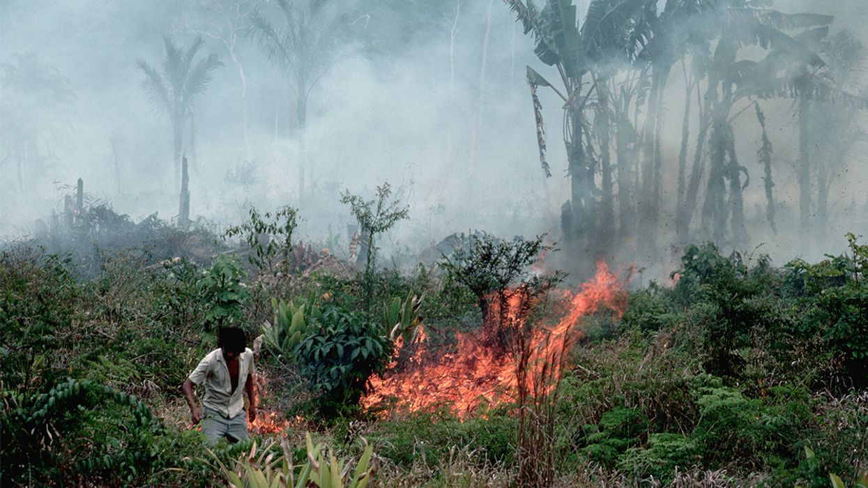 Brazil Announces 60-Day Ban on Clearing Land With Fire