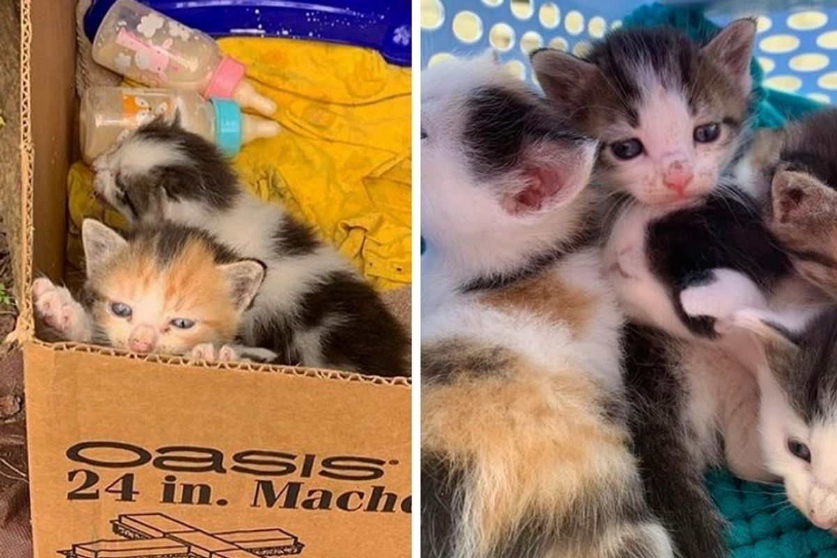 Man Hears Meowing from Parking Lot and Discovers a Box of Kittens