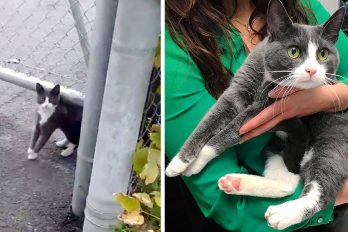 Stray Kitten Befriended Woman Who Was Kind to Her, and Kept Coming Back