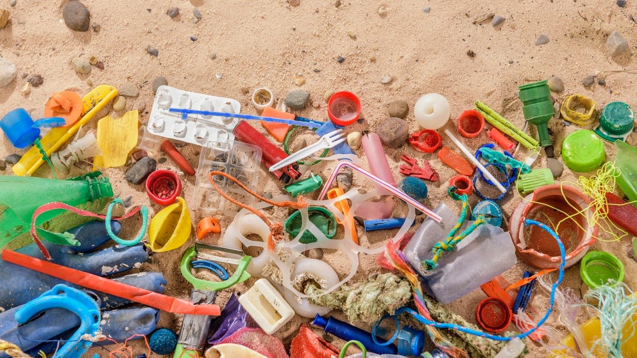 Plastics in Fossil Record: 'This Is What Our Generations Will Be Remembered for'