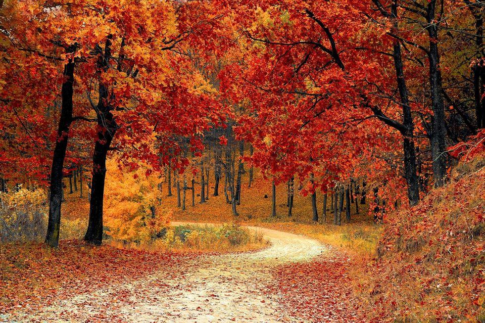https://pixabay.com/photos/fall-autumn-red-season-woods-1072821/