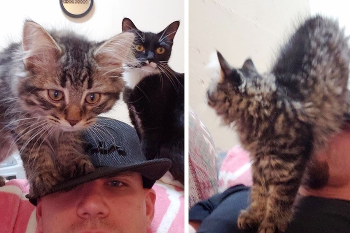 Man Went to Hang Out with Rescued Cats but Ended Up Being Swarmed by Kittens