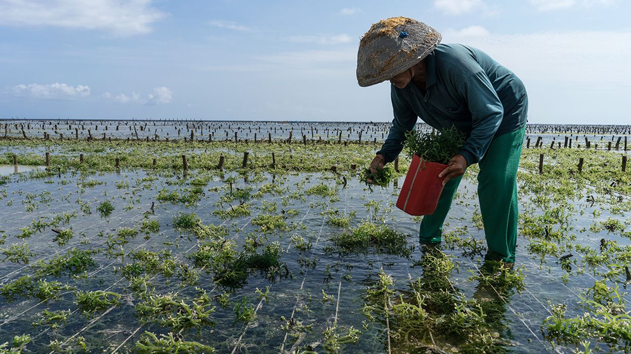 Seaweed Farming Could Help Battle Climate Change