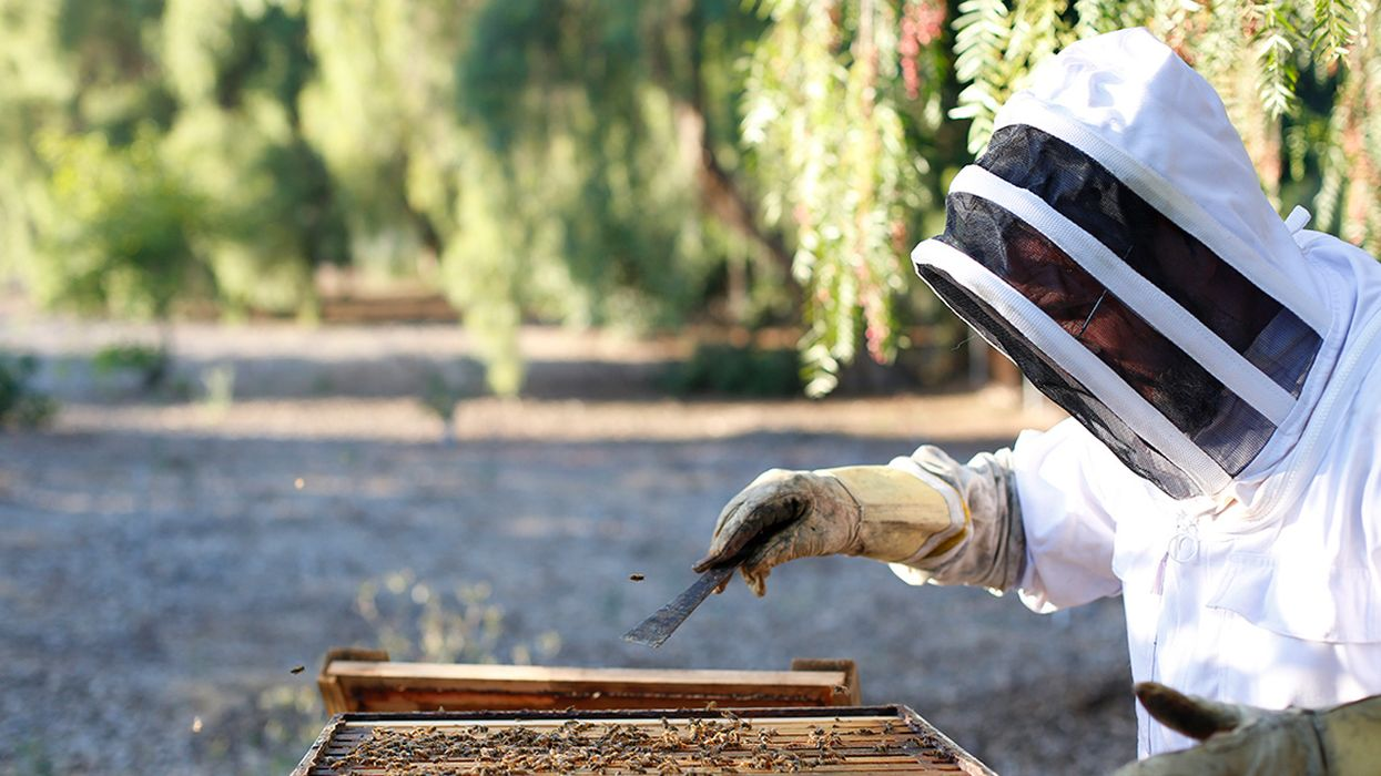 U.S. Beekeepers File Suit Against Trump EPA Charging 'Illegal' Approval of Insecticide Linked to Mass Die-Off