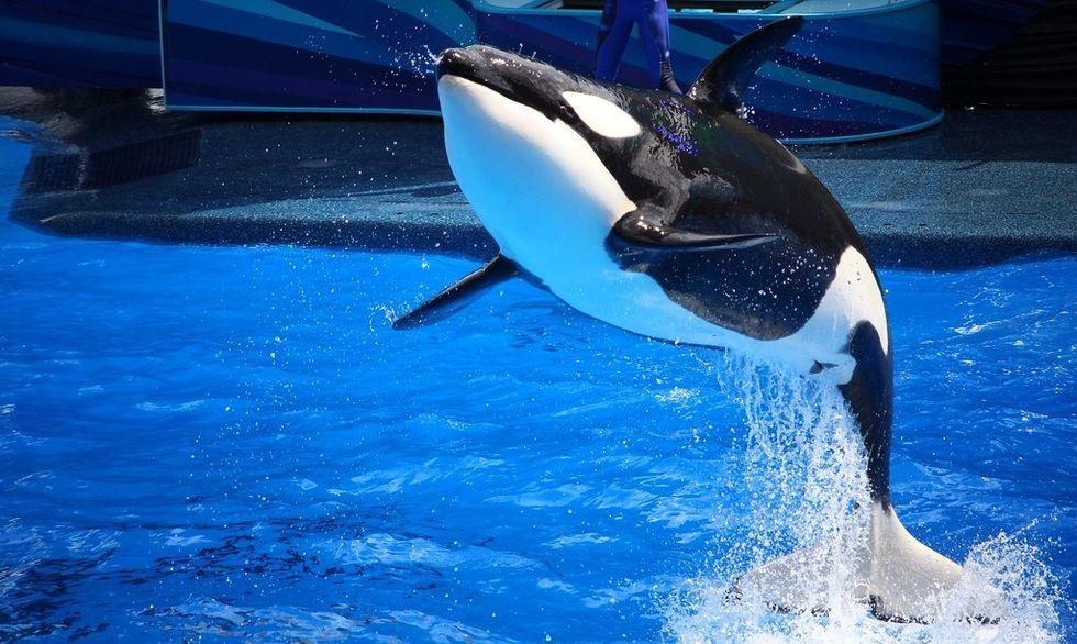 *Maybe* We Shouldn't Boycott SeaWorld