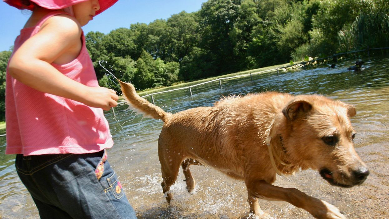 Toxic Algae That Kills Dogs Found in NYC Parks