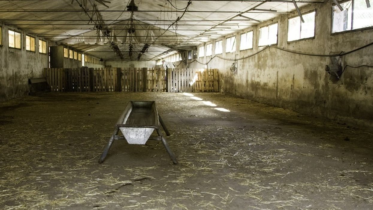The writing on the wall: The coming collapse of the industrial livestock industry