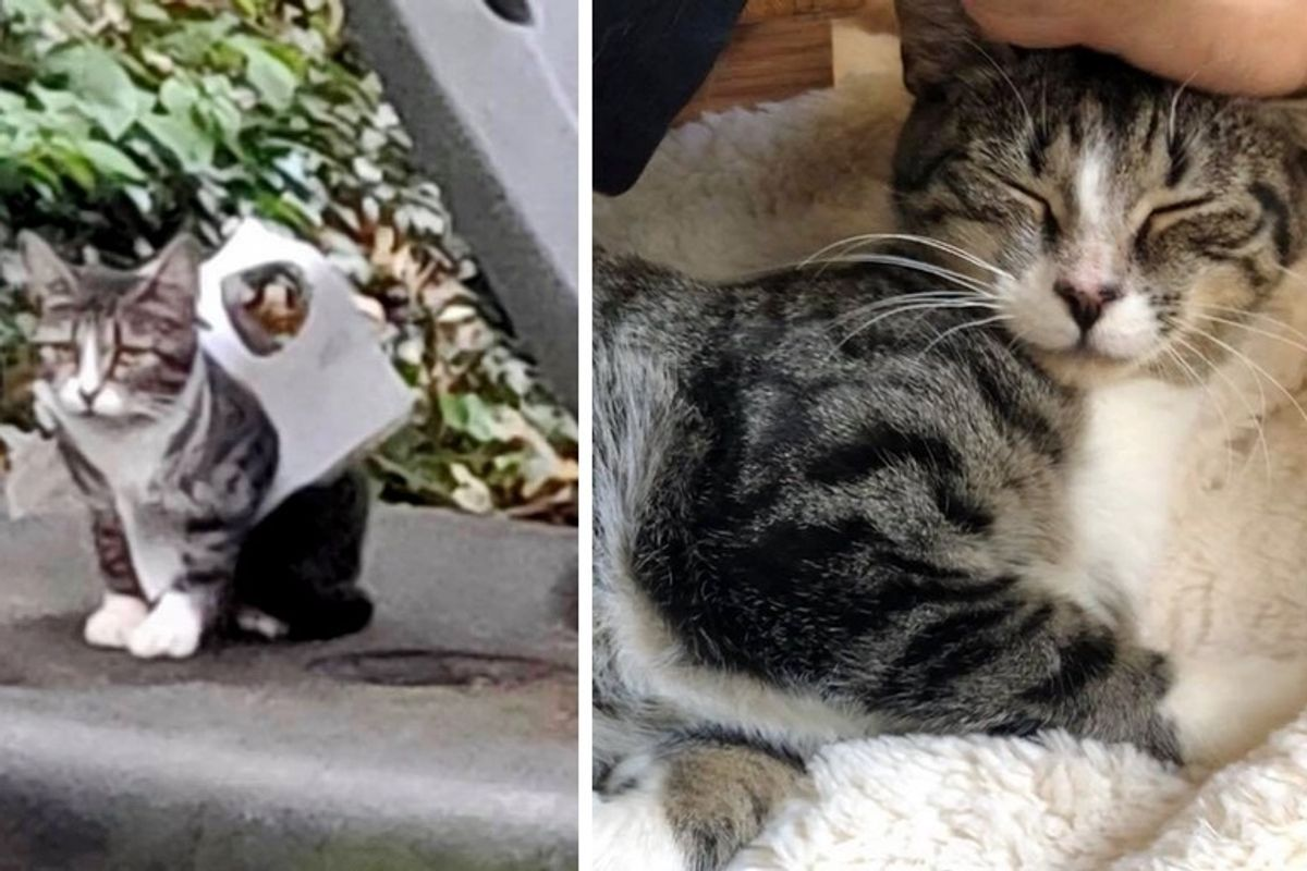 Woman Found Stray Kitten Trapped in Plastic and Rushed to Her Rescue