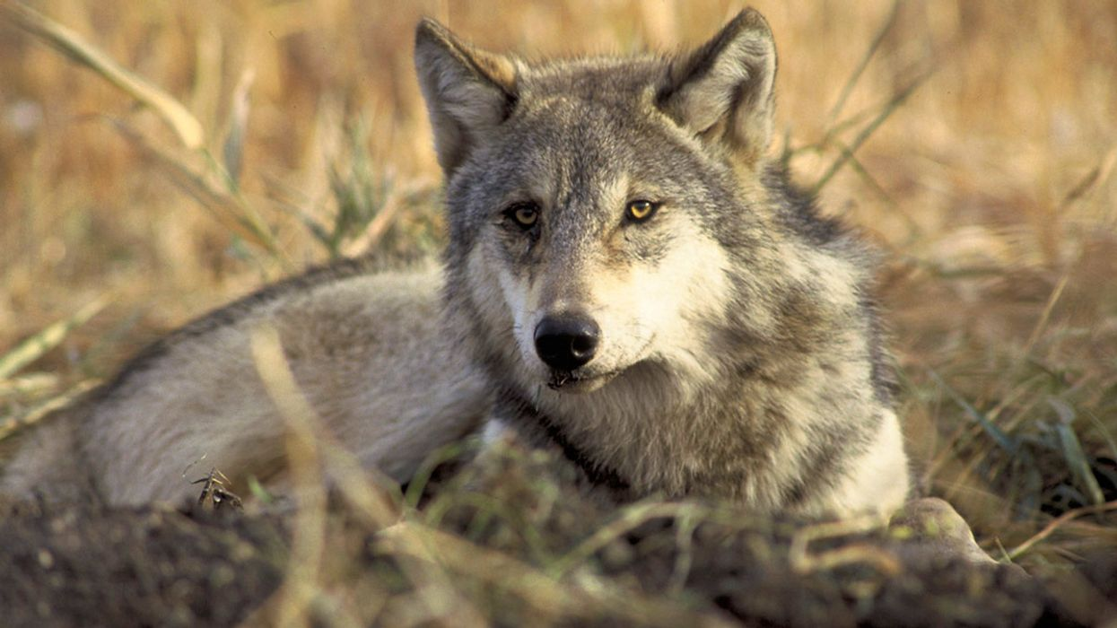 17 States Sue to Stop Trump Admin Attack on Endangered Species Act