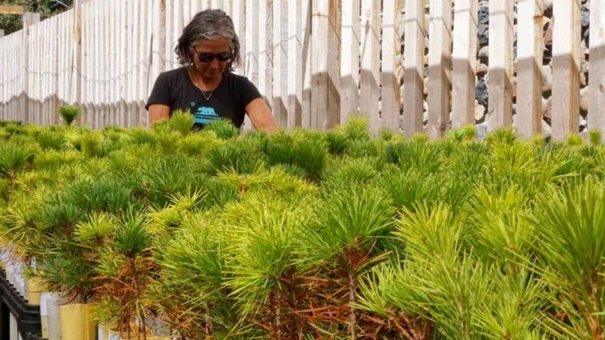 These Trees Survived California's Drought and That's Giving Scientists Hope for Climate Change