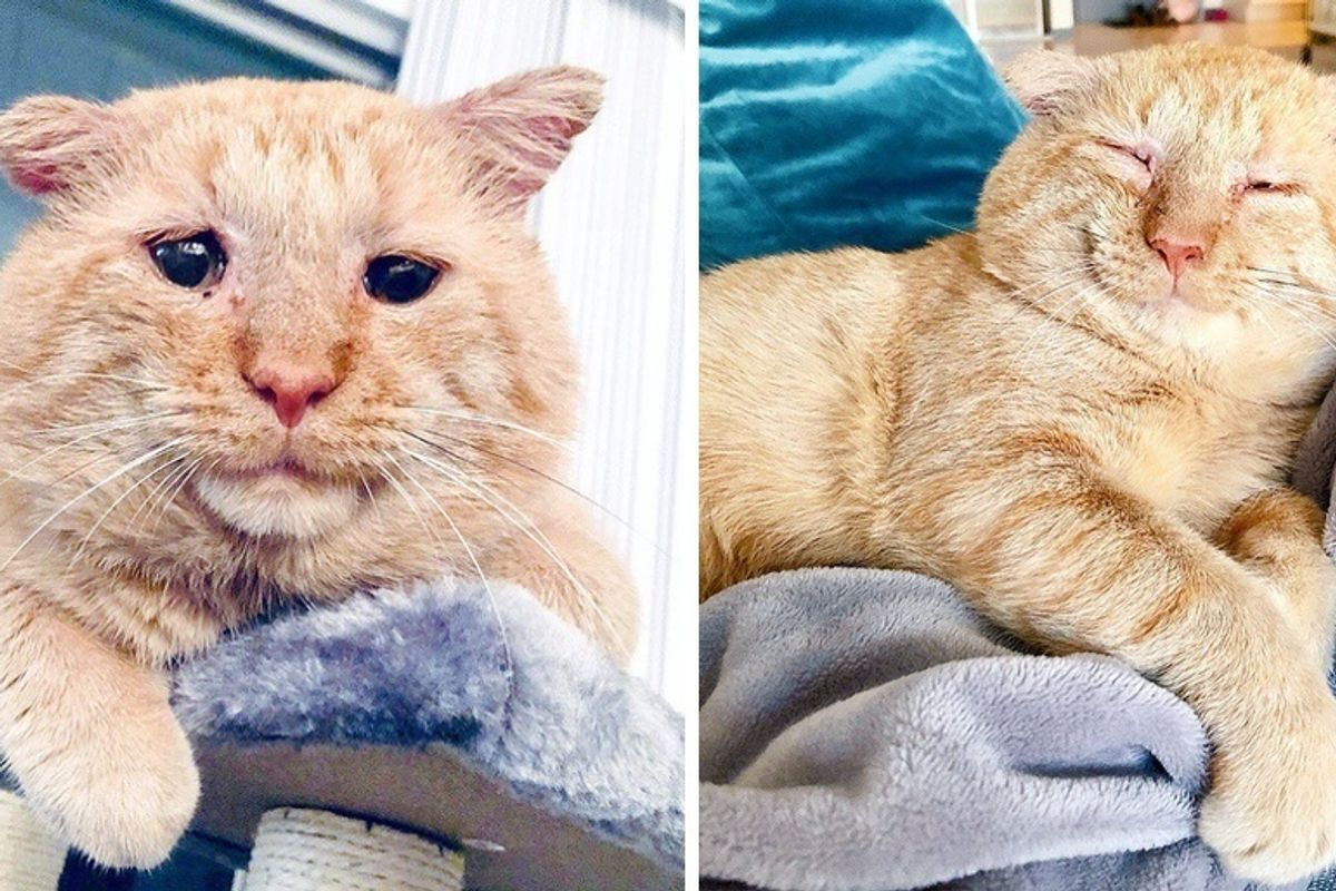 Woman Befriends Cat Who Lived Years on the Streets, and Comes Back for Him