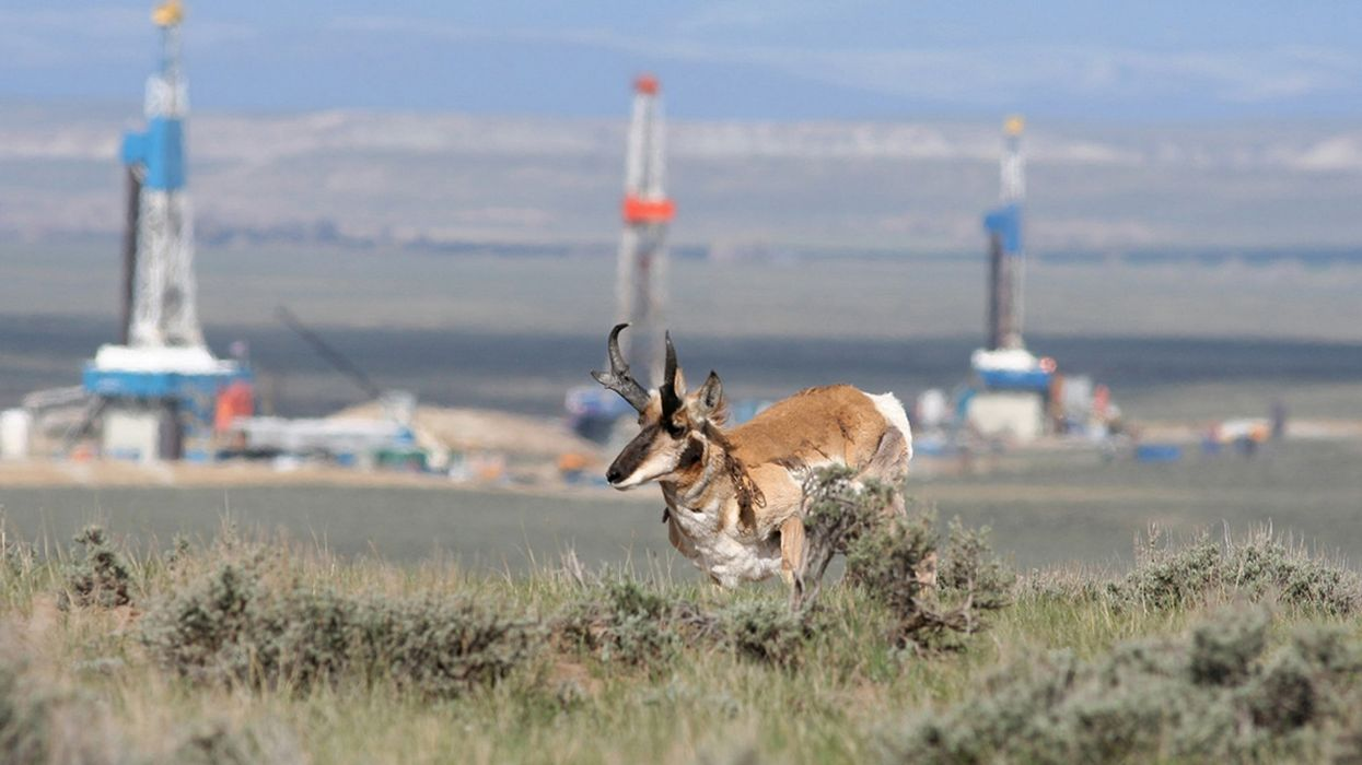 We're Just Starting to Learn How Fracking Harms Wildlife
