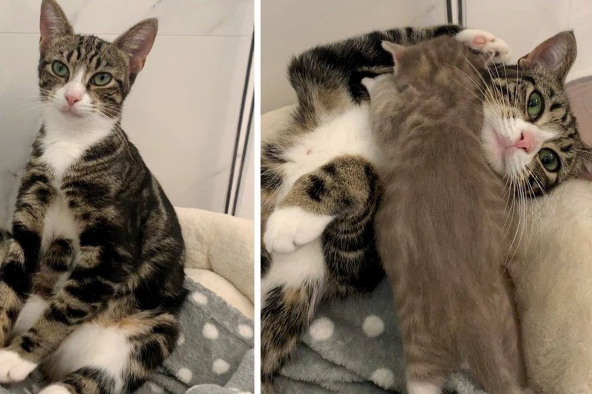 Cat So Happy to Find Help for Her Kittens After They Were Rescued from Garage