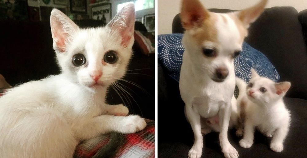 Kitten Found Alone on the Street, Meets Dog and Insists on Being His Friend