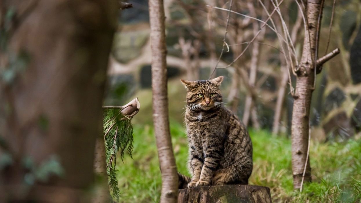 41% of UK Species Have Declined Since 1970, Major Report Finds