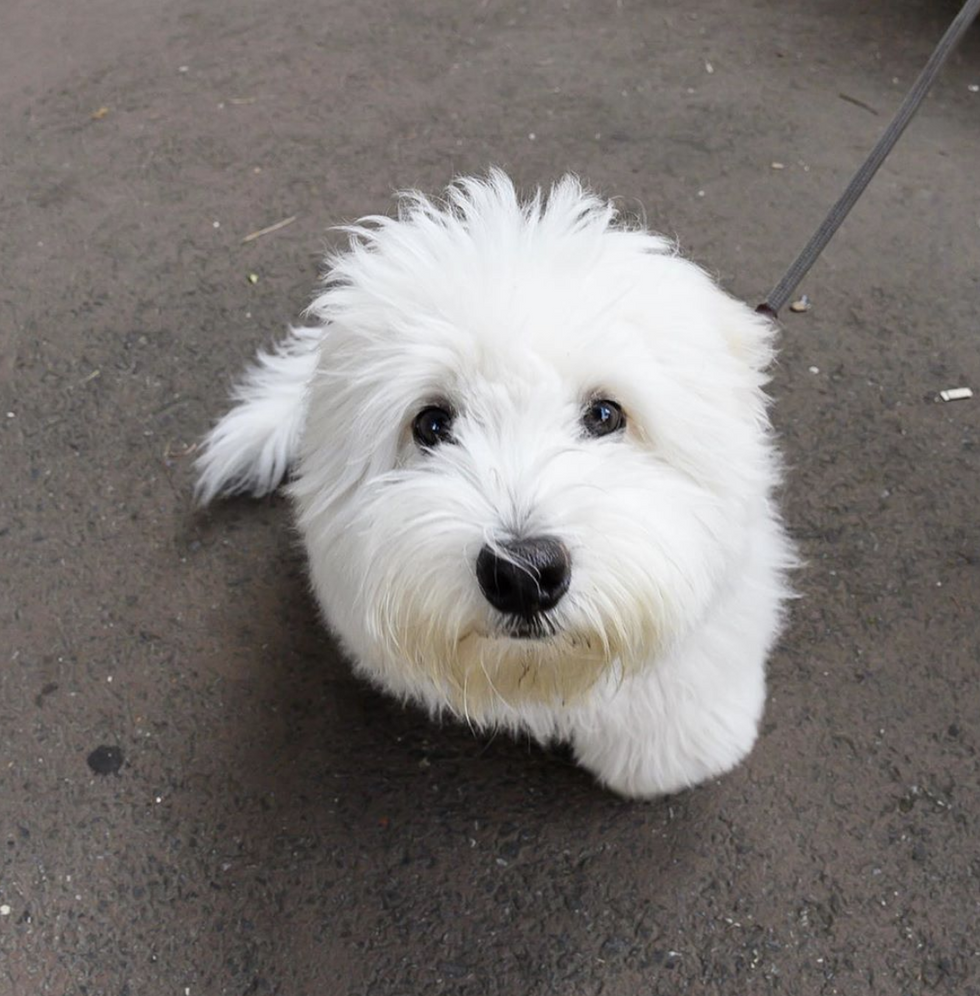 Just 11 Cute Dogs Who Want To Help You Get Through The Week