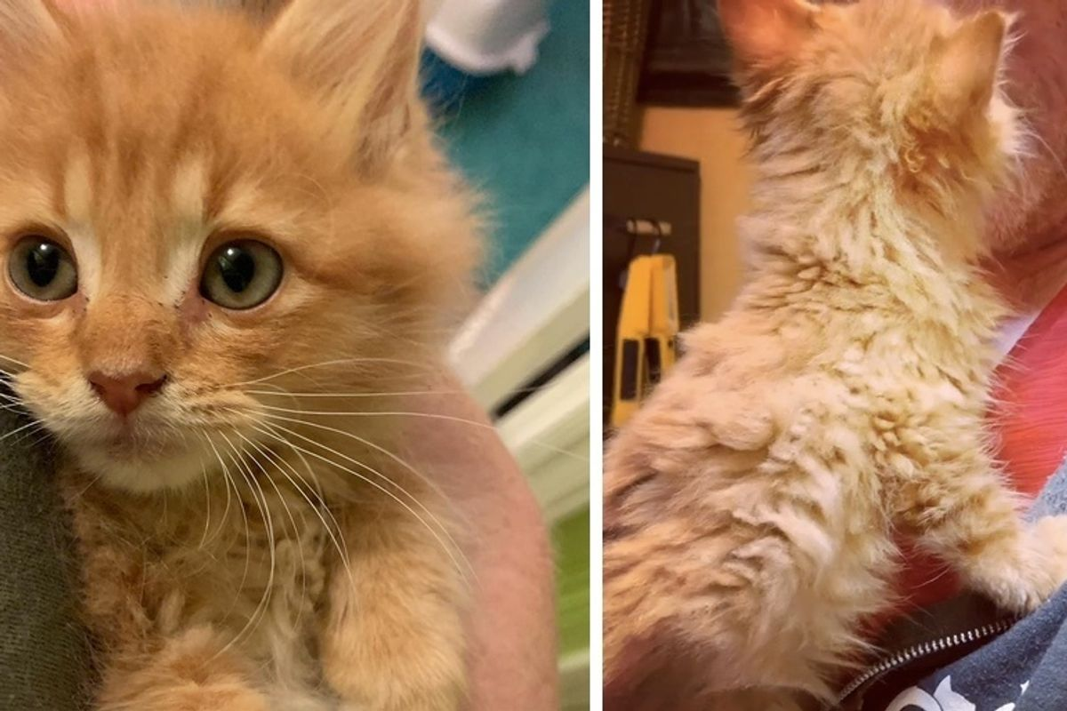Kitten Insists on Being Cuddled After He Was Rescued from Rough Life on Streets