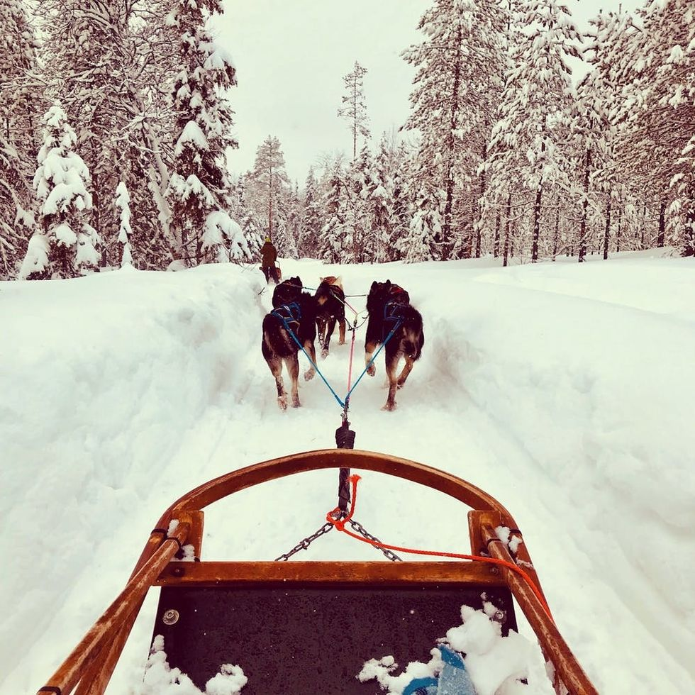The Cold Never Bothered Me Anyway: What Husky Sledding in Finland Taught Me