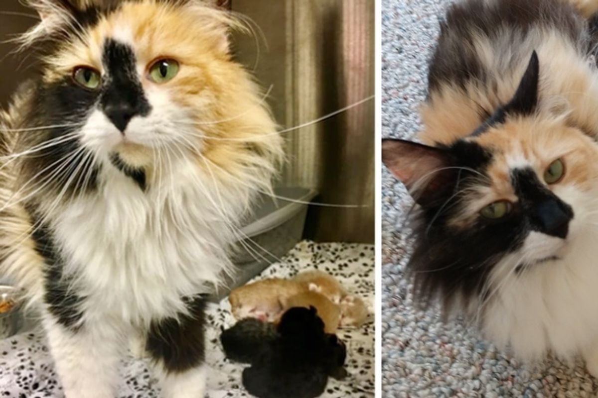 Stray Cat Brought to Clinic in a Carrier - Staff are Surprised to Find Newborn Kittens Inside