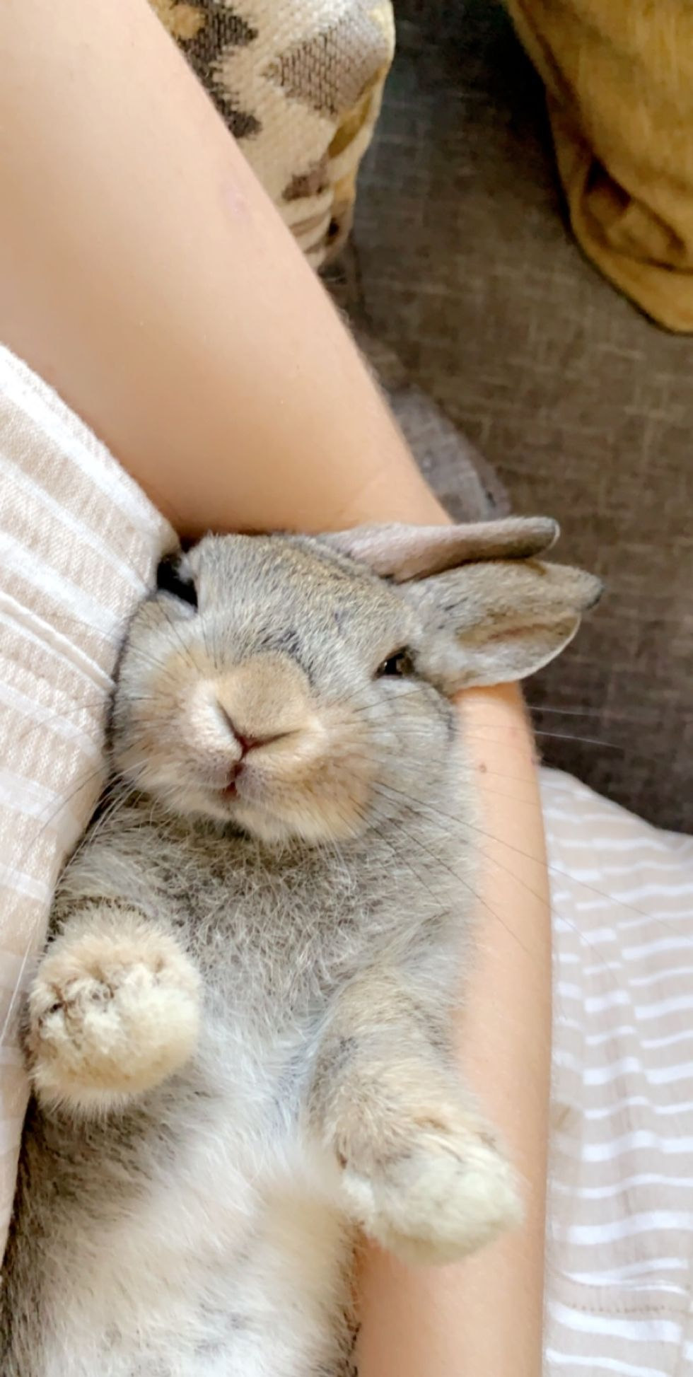 Why A Bunny Is The Best Emotional Support Animal