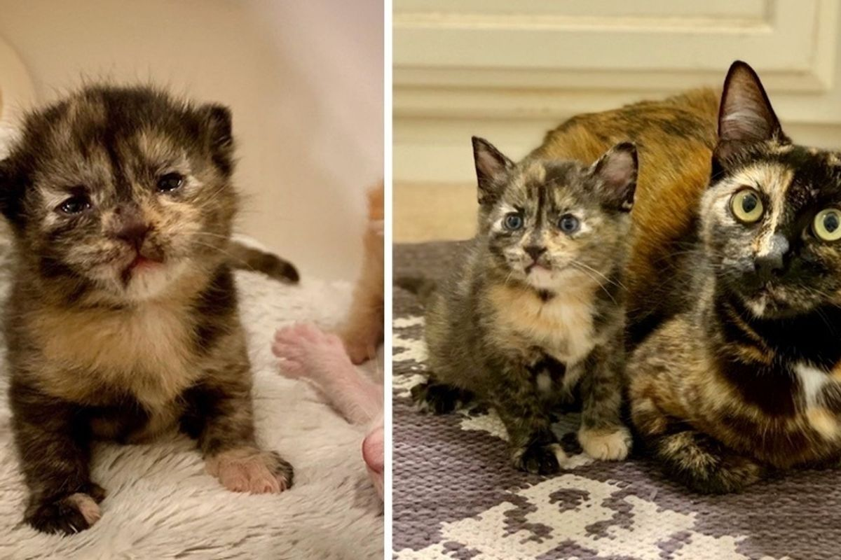 Street Cat Finds Family to Help Raise Her Kittens — Her Tiny Lookalike is Determined to Stand Out