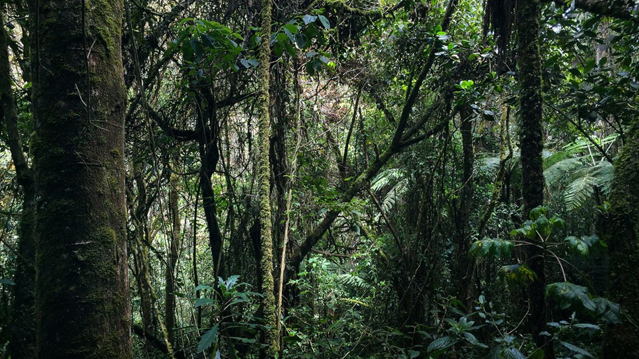 Why Indigenous Hunting Is Essential to Forest Sustainability