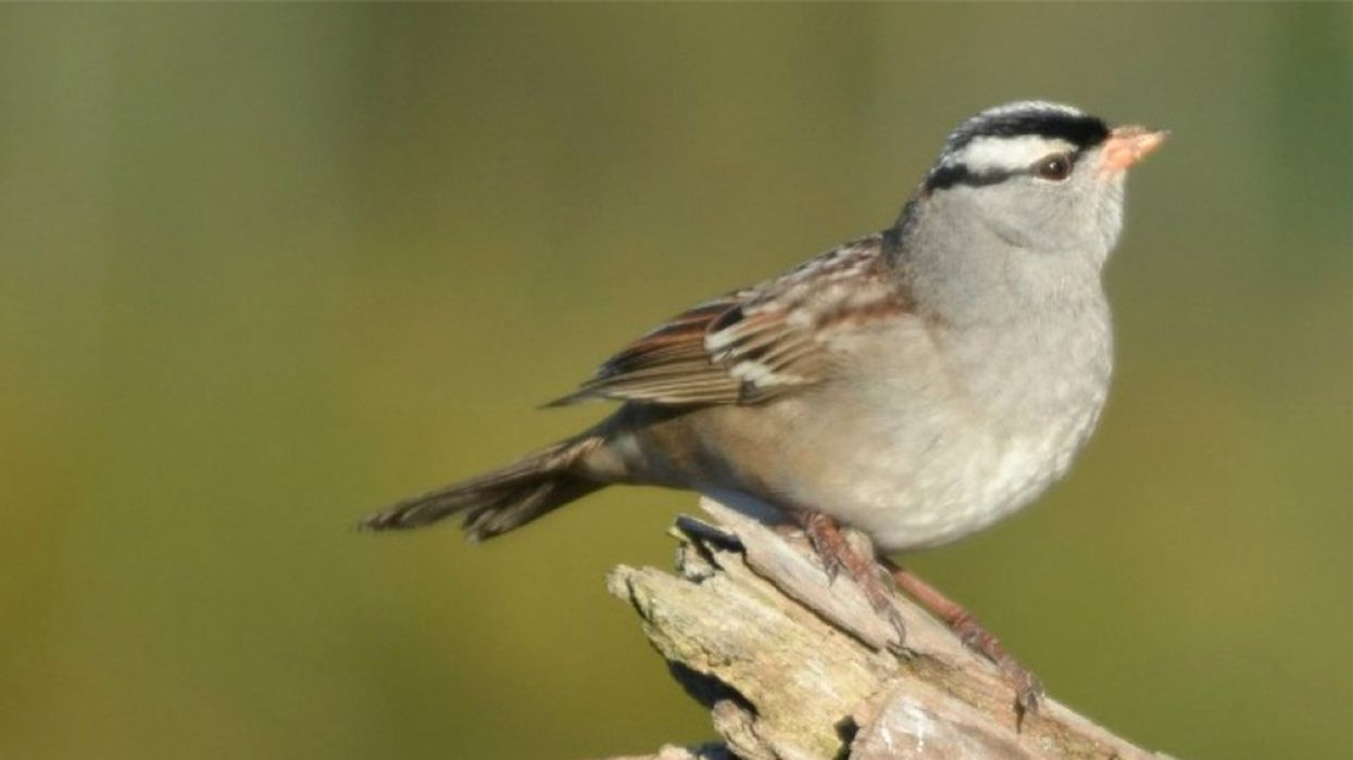 Neonics May Be Killing Birds in Addition to Bees, Groundbreaking Study Finds