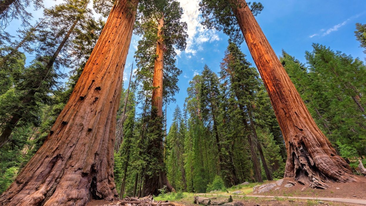 Conservation Group to Buy World's Largest Privately Held Sequoia Forest for $15M