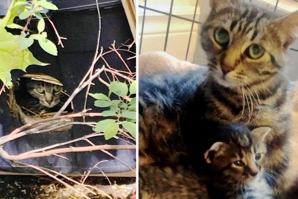 Woman Follows Cat to a Box on Side of Road and is Surprised to Find Kittens Inside