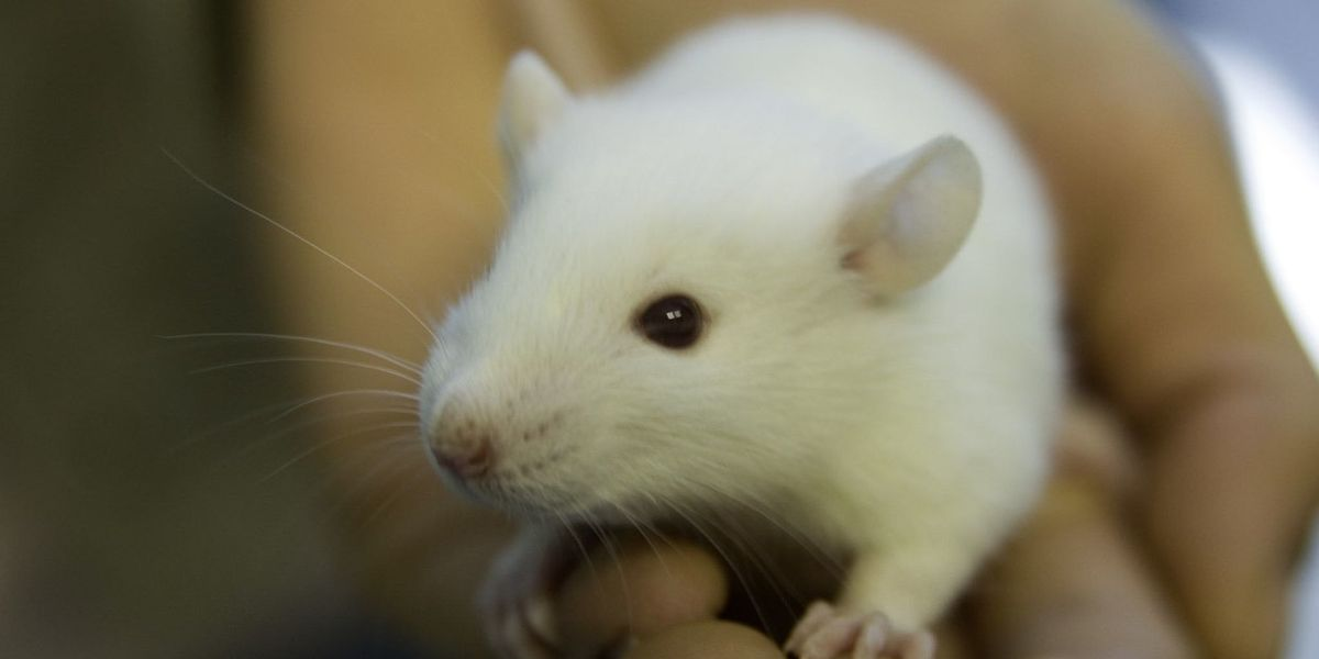 Op-ed: Thinking through the EPA's commitment to eliminate the use of mammals in toxicity testing