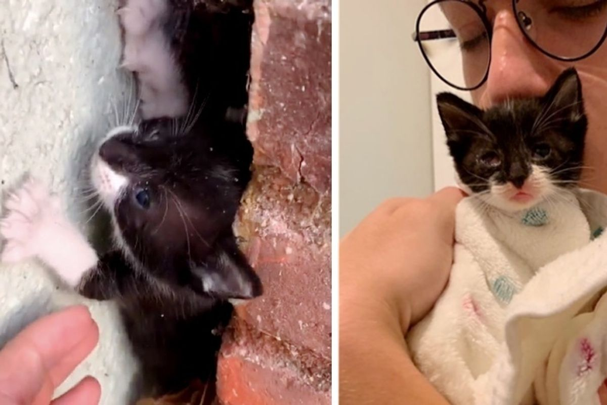 Young Man Rescues Kitten from Building - the Kitty Can't Stop Purring
