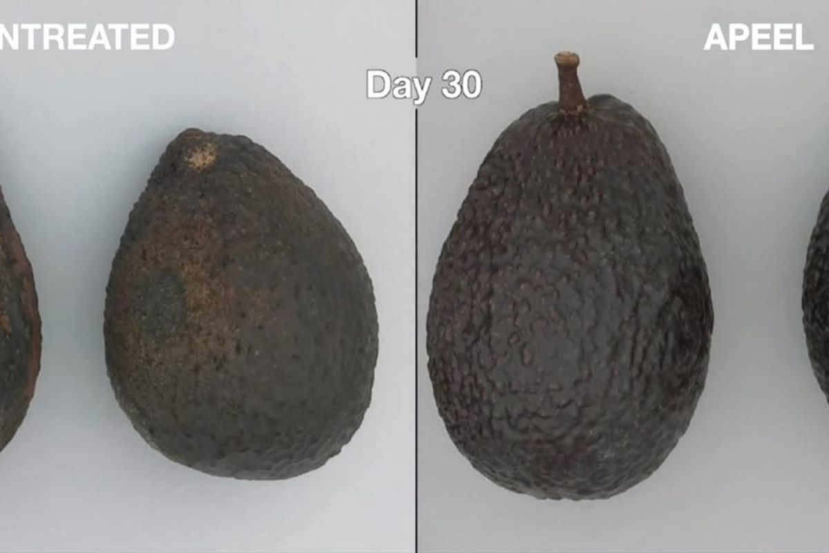 Avocados that stay ripe twice as long to be available nationwide