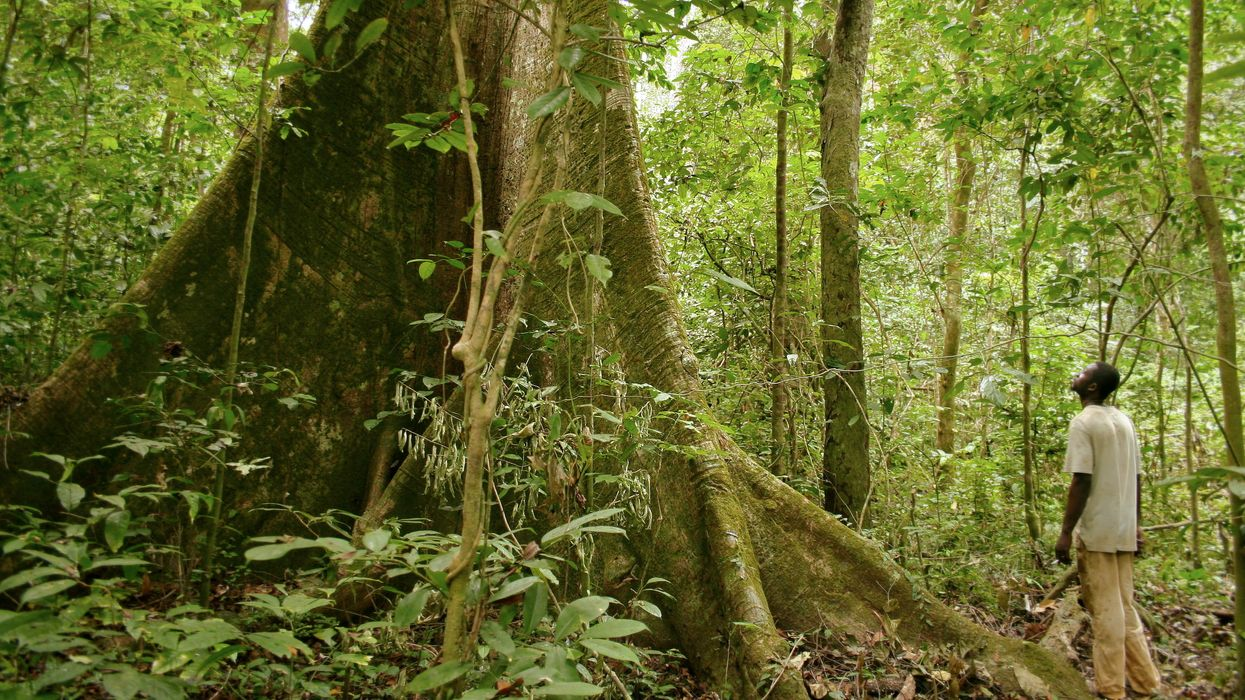 In historic deal, Gabon to get $150 million to protect its forests