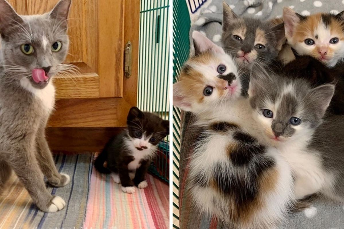 Stray Cat Protects Her Kittens from Rough Conditions Until Rescue Arrives