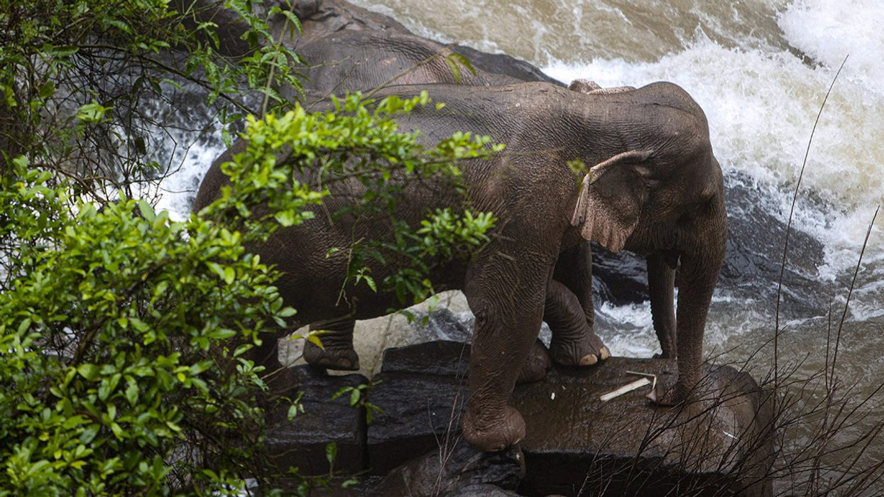 6 Elephants Die After Plunging off a Waterfall in Thailand