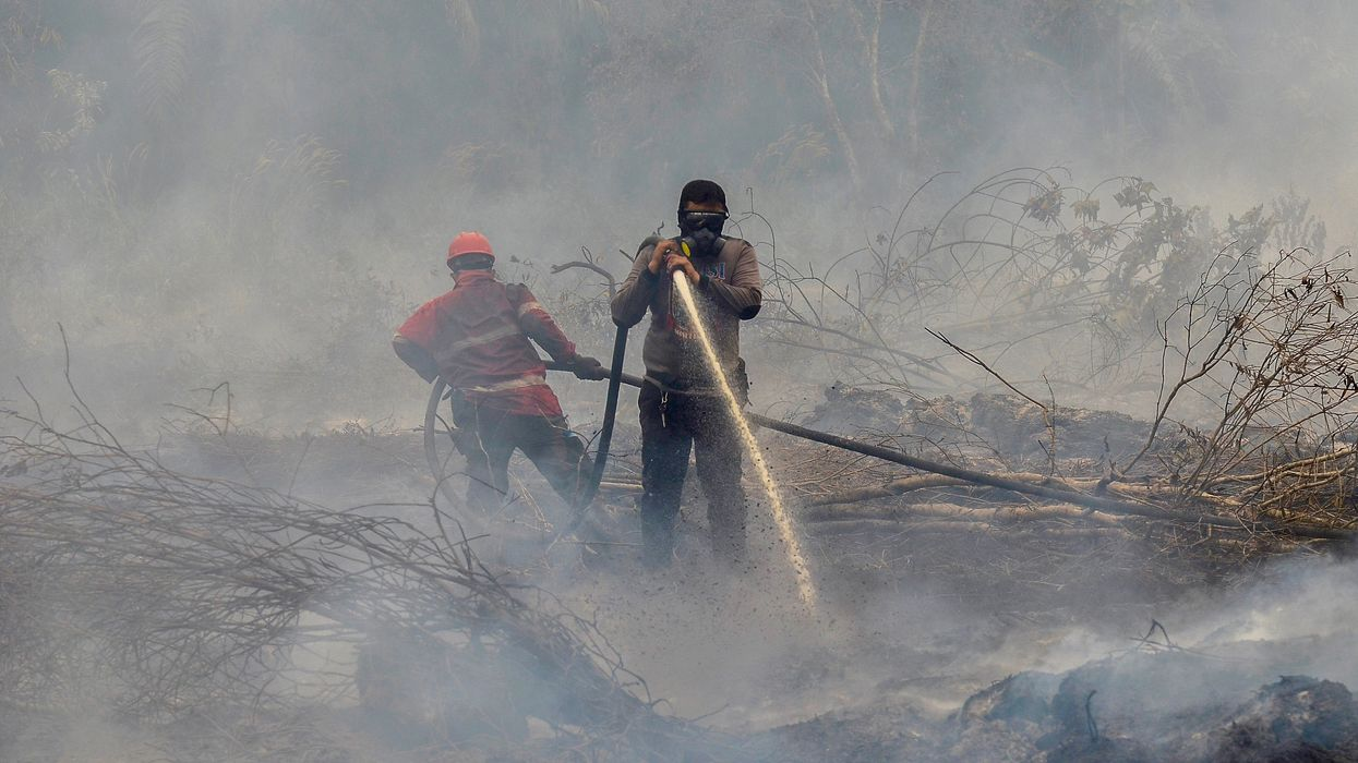 Intense Forest Fires Threaten to Derail Indonesia's Progress in Reducing Deforestation