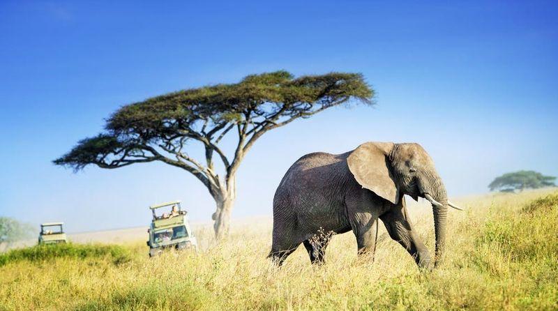 Éléphant traversant le Serengeti