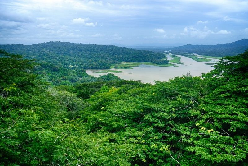 Forêt tropicale à Gamboa, Panama