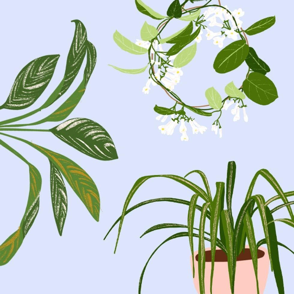 These 9 Plants Will Help You Get a Better Night's Sleep