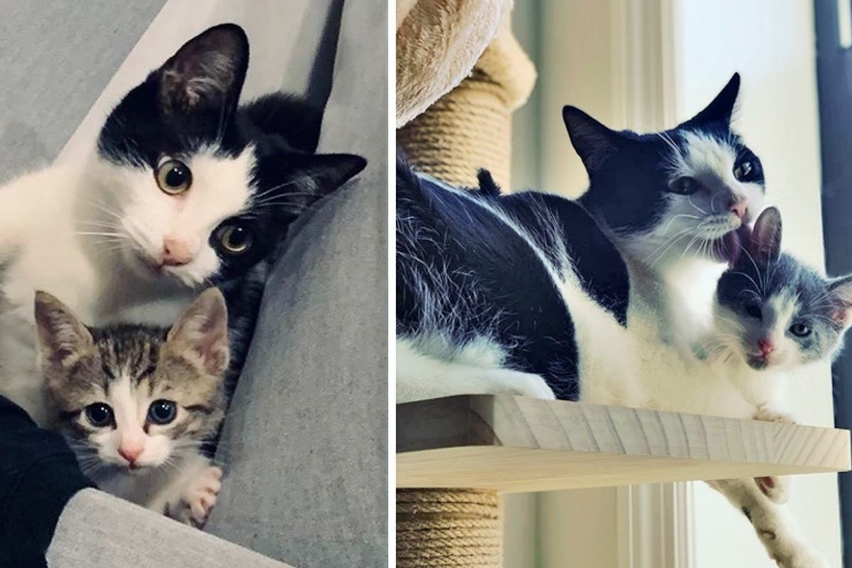Woman Took Orphaned Kitten Home to Foster But the Tuxedo Had Plan of Her Own
