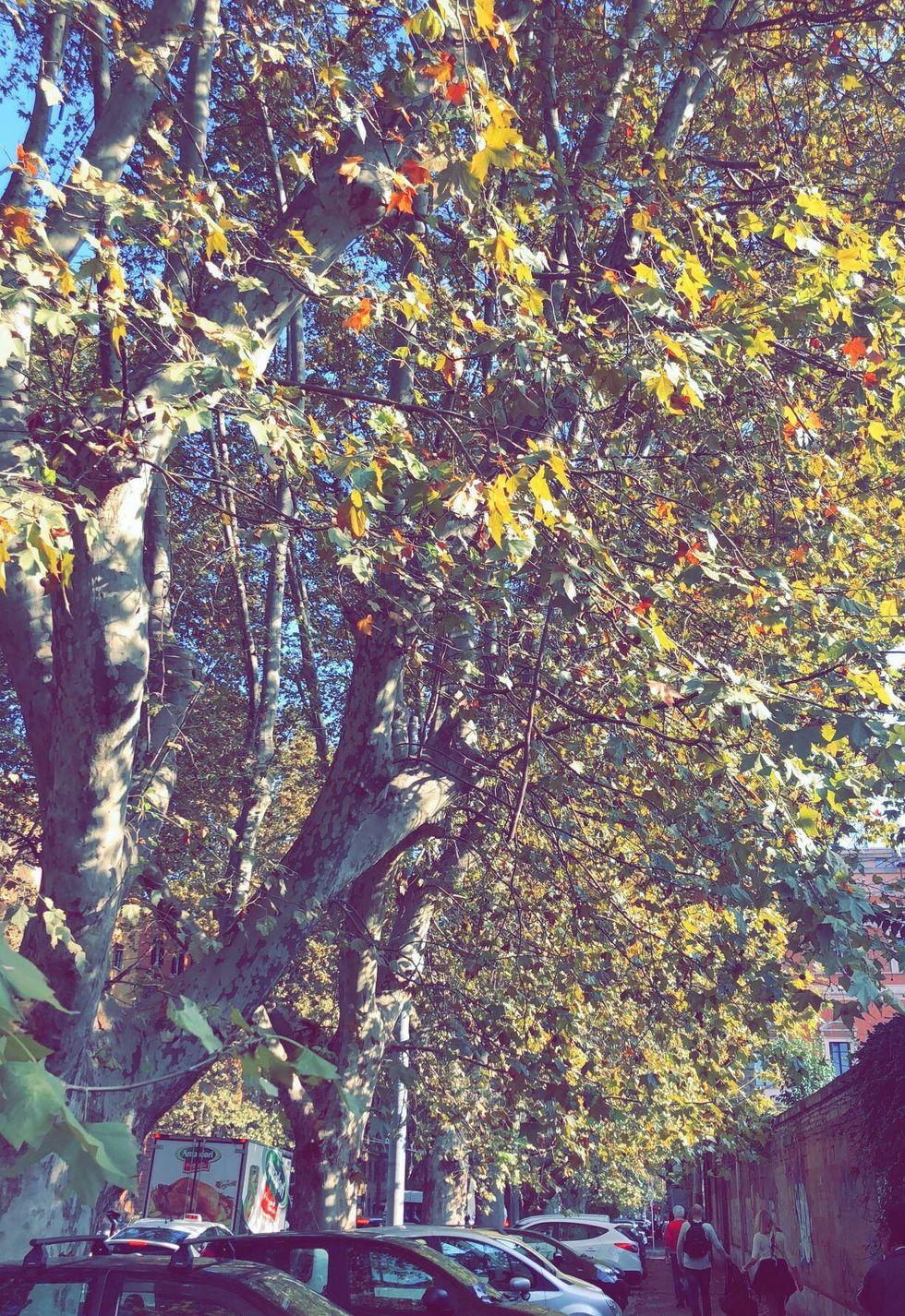 Decompress: Fall Style
