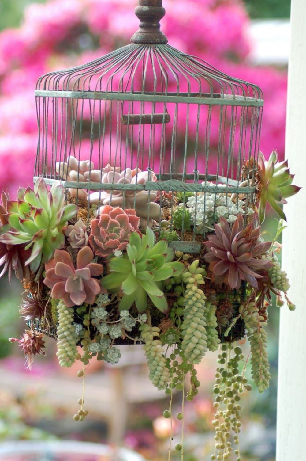 21 Creative Succulent Container Gardens To Diy Or Buy Now Brit Co