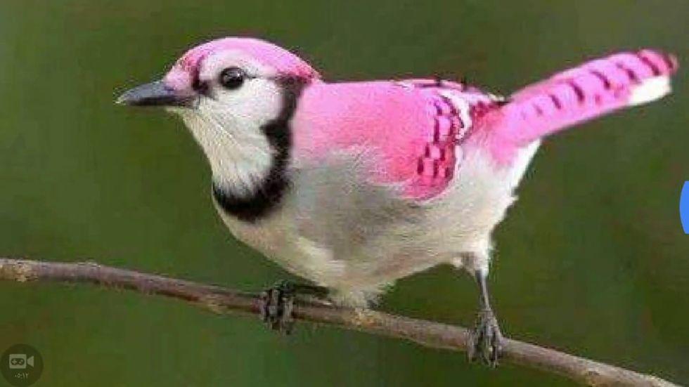 ptica voting alt