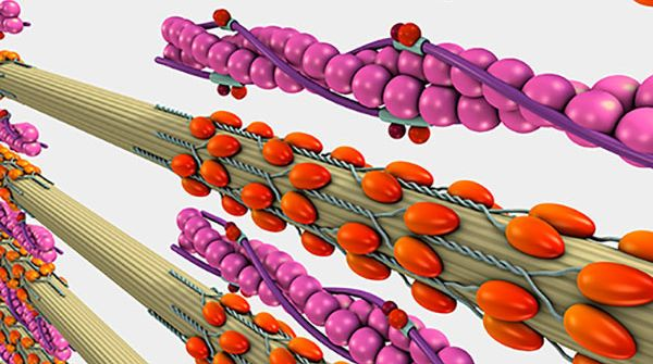 A graphic shows how proteins are structured.