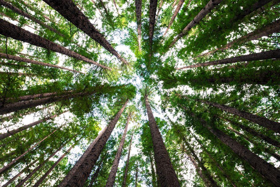 Save A Tree, Save A Life