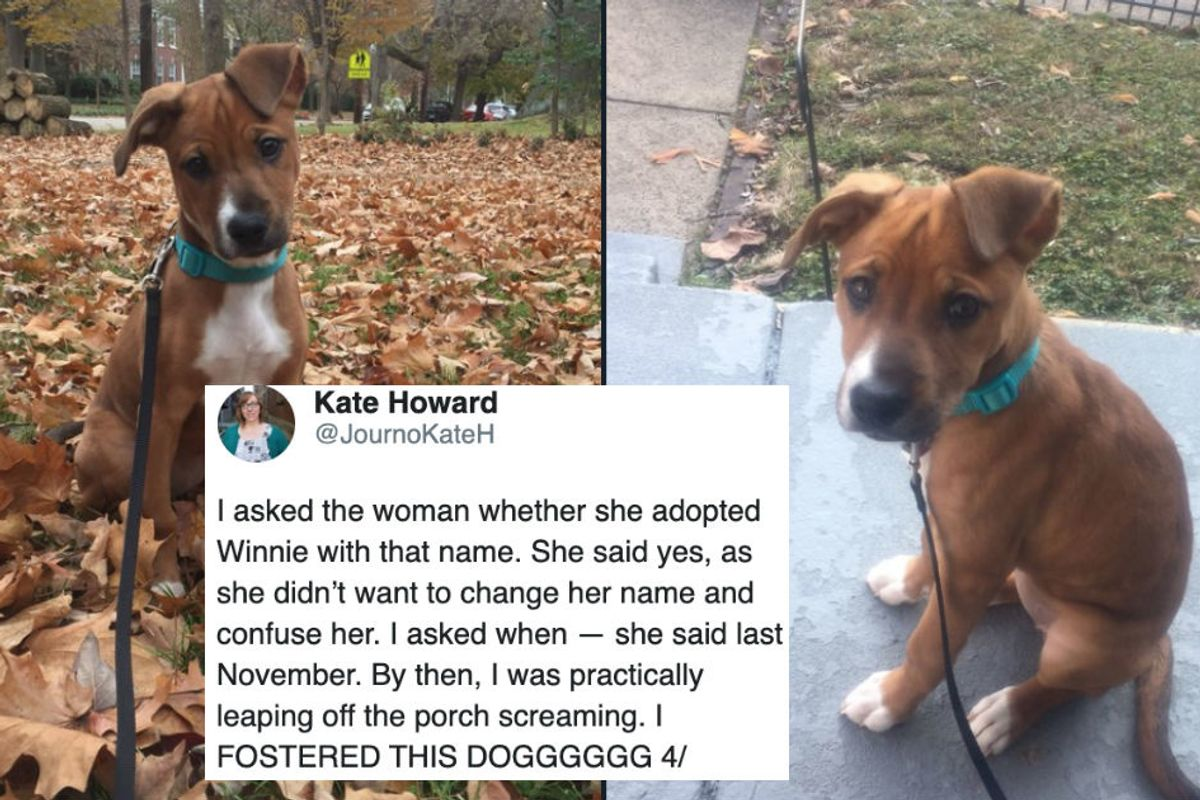 This adorable Twitter thread captures a woman's surprise reunion with her foster dog