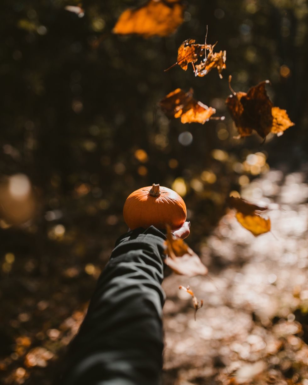 10 activites you can do this fall even if you're single