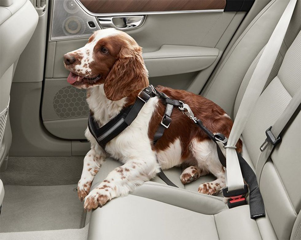 Restrainted Pets seat belt safety harness